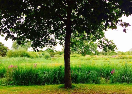 Oud-West, Holland