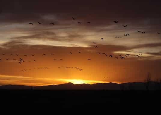 Alamosa, Kolorado, Birleşik Devletler