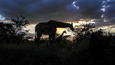 Nairobin