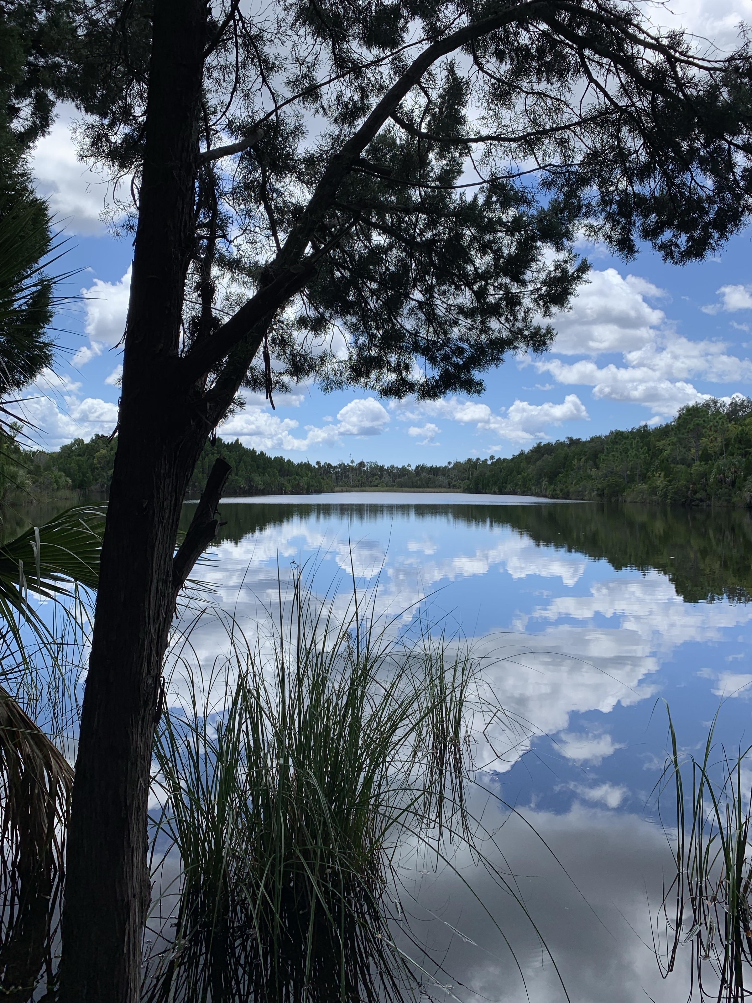 Crystal River Preserve State Park, Florida, United States of America