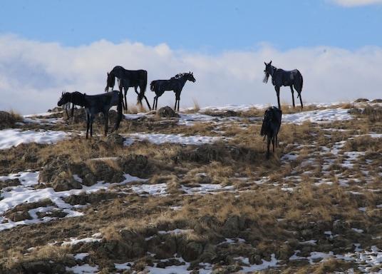 Three Forks, Montana, United States of America