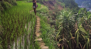 Banauen riisipenkereet