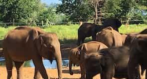 우다왈라와 코끼리 고아원
