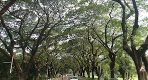 University of the Philipppines-Diliman
