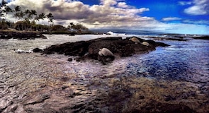 Richardson's Ocean Park