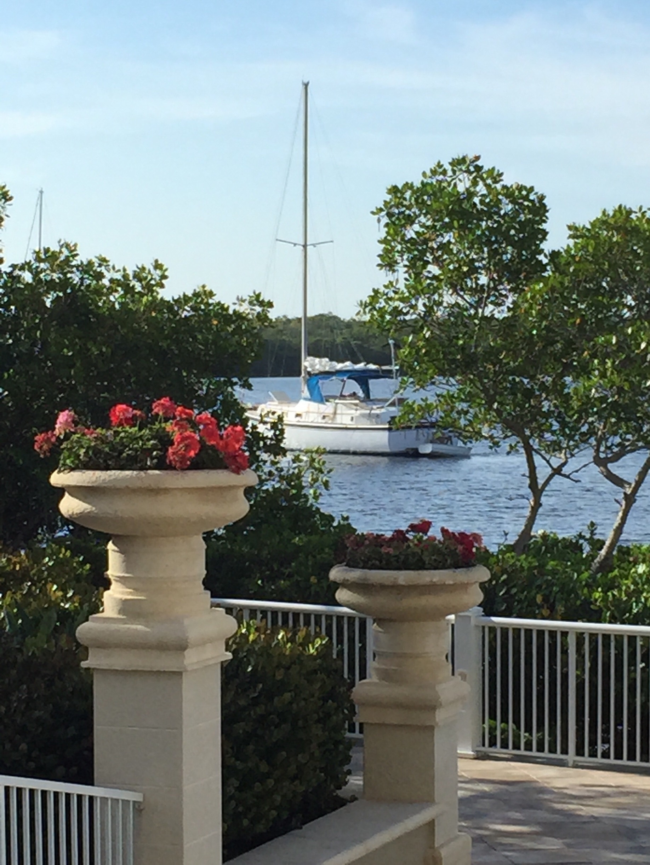 Pelican, Cape Coral, Florida, Verenigde Staten