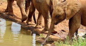 Réserve animalière David Sheldrick Elephant & Rhino Orphanage
