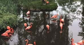 Granby Zoo (zoologická záhrada)
