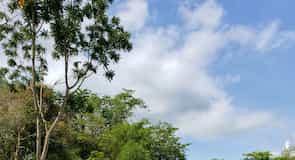 Καταφύγιο Ελεφάντων Πουκέτ