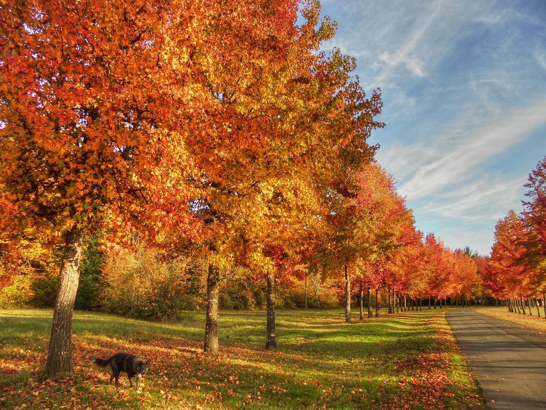 Willamette Park, Corvallis, Oregon, Yhdysvallat