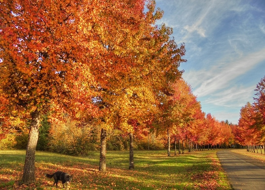 Corvallis, Oregon, Spojené štáty