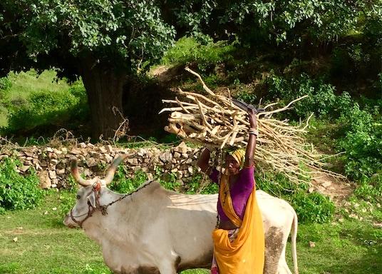 Гоганда, Индия
