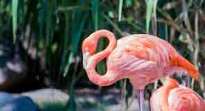 ABQ BioPark Zoo
