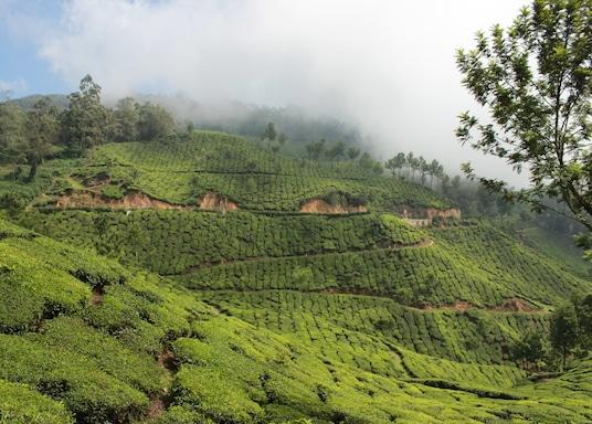 Nullatanni, 印度