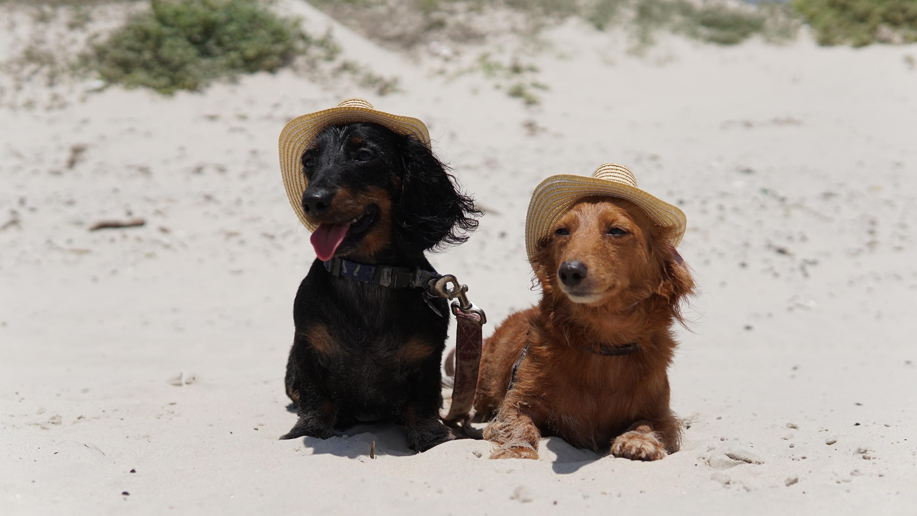 Port Aransas Beach, Port Aransas, Texas, United States of America