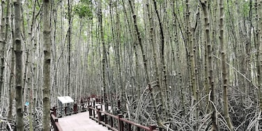 Walking on the trail in mangrove forest. At the back end, there is an observation tower that you can walk up to see the greenery view on top of mangrove forest. #GreatOutdoors