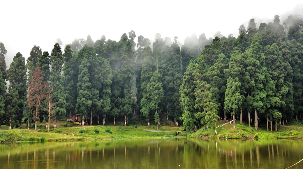 Bilde tatt av Sudip Majumder