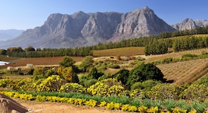Stellenbosch Üniversitesi