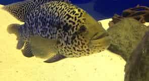 Protaras Ocean Aquarium