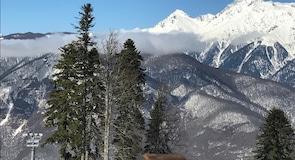 Mountain Carousel