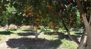 Ботанічний сад Криту