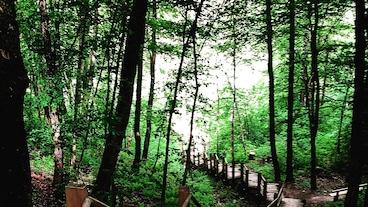 戈雅國家公園/