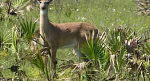 Štátny park Kissimmee Prairie Preserve
