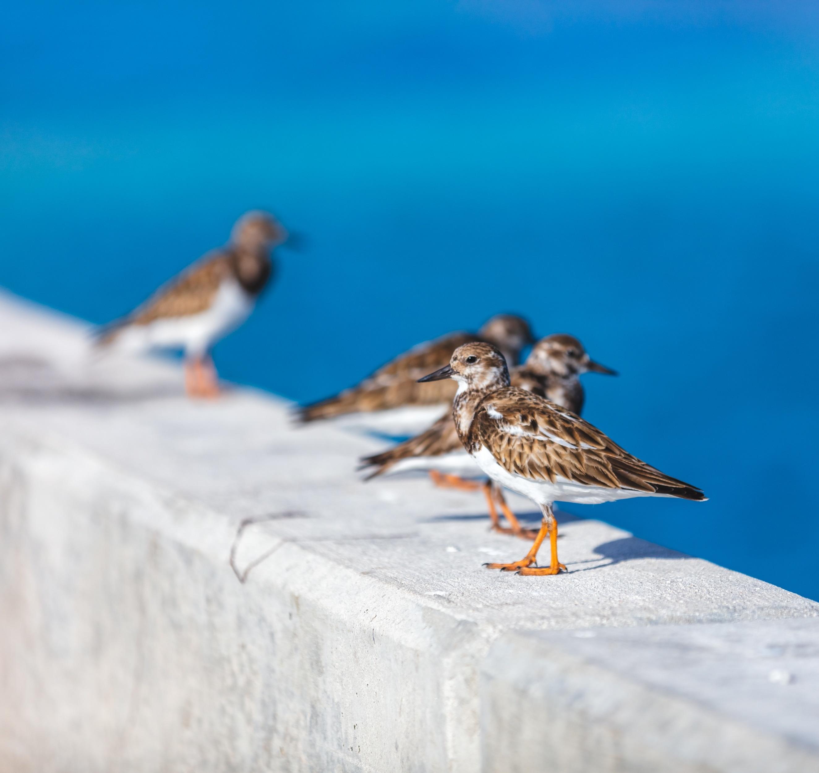 Conch Key, Florida, United States of America