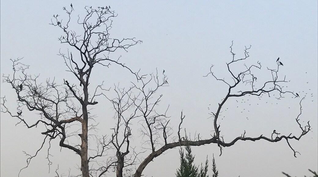 Photo by Pooja Bhatia
