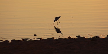 Bird catching food during sunset
