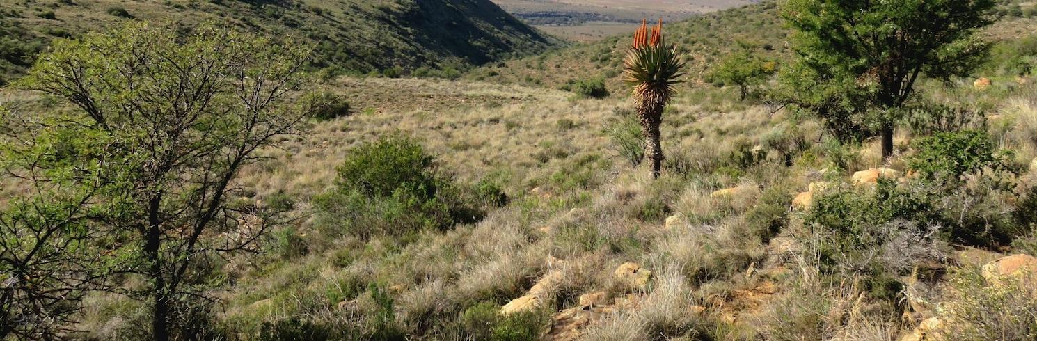 藍鶴之路, 南非