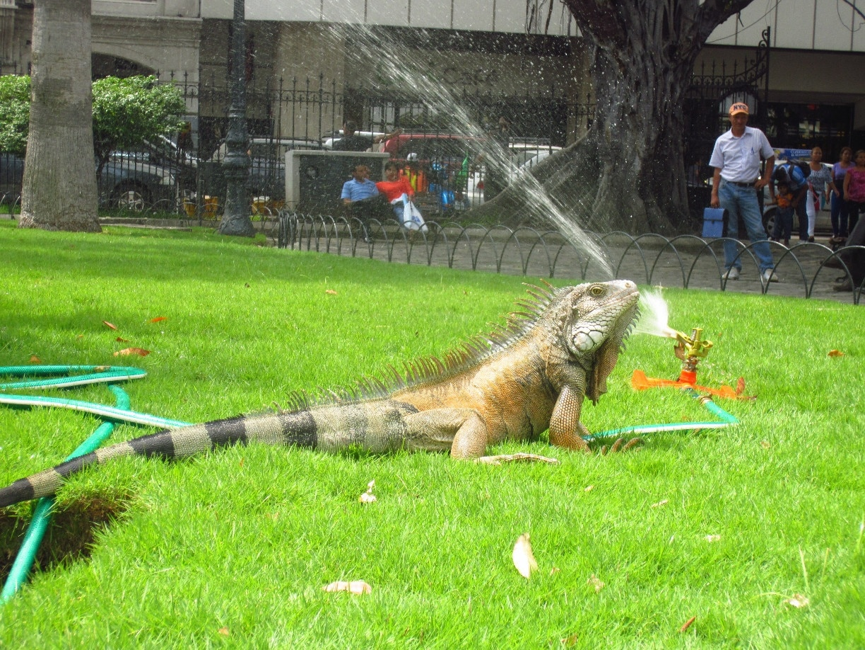 Parroquia Sucre, Guayaquil, Guayas, Ecuador