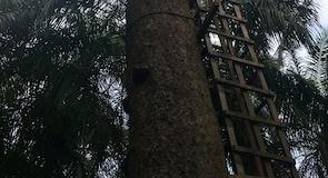 Lekki Conservation Centren luonnonsuojelualue