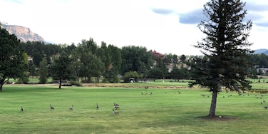 Do geese help or hinder your golf score?