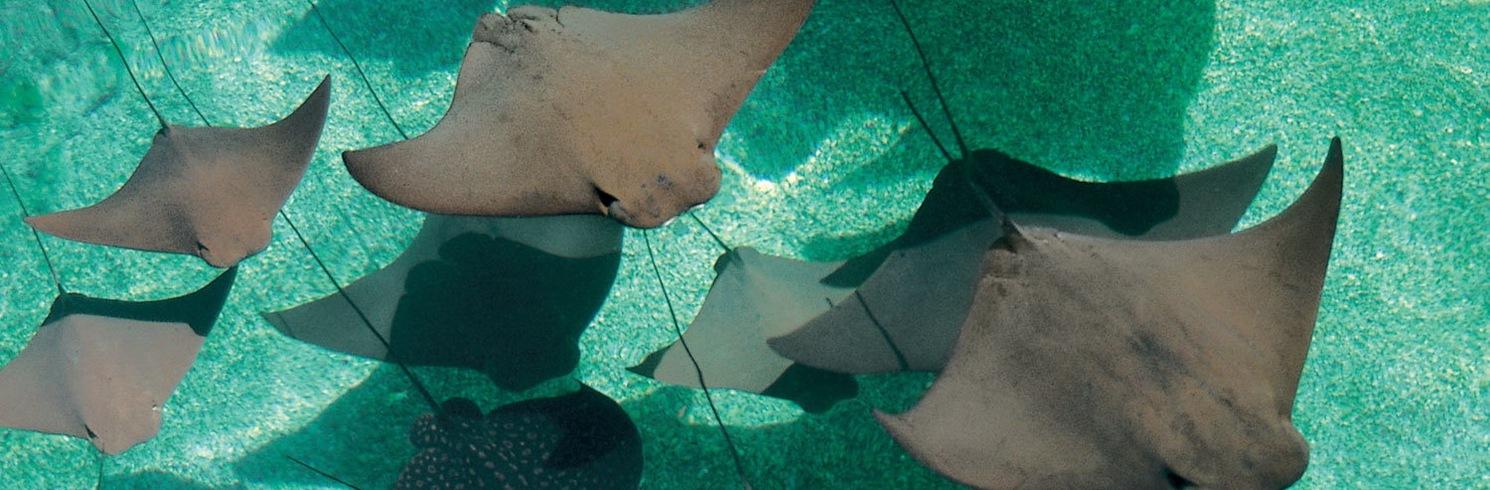Deadman's Reef, Bahamas