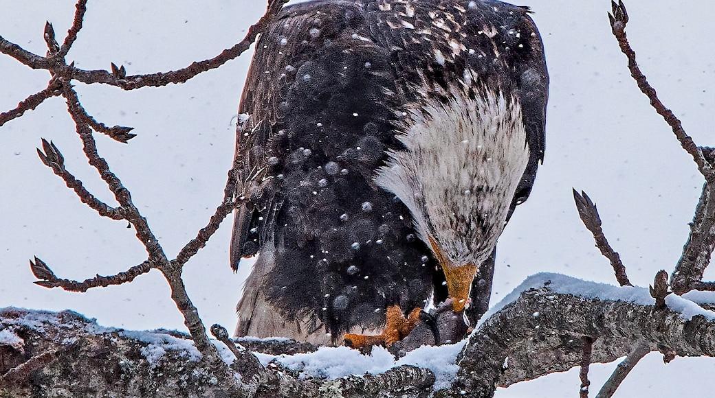 Kuva: Gary Miller