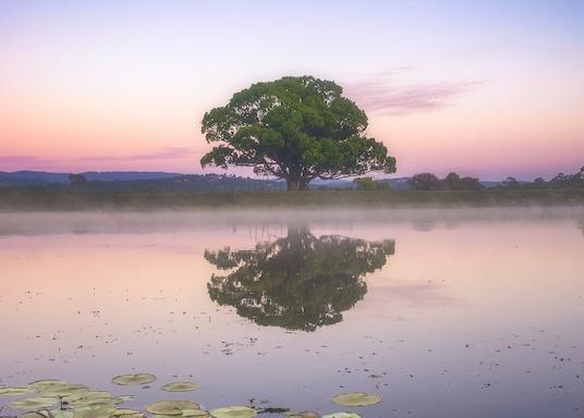 גולד קוסט, קווינסלנד, אוסטרליה