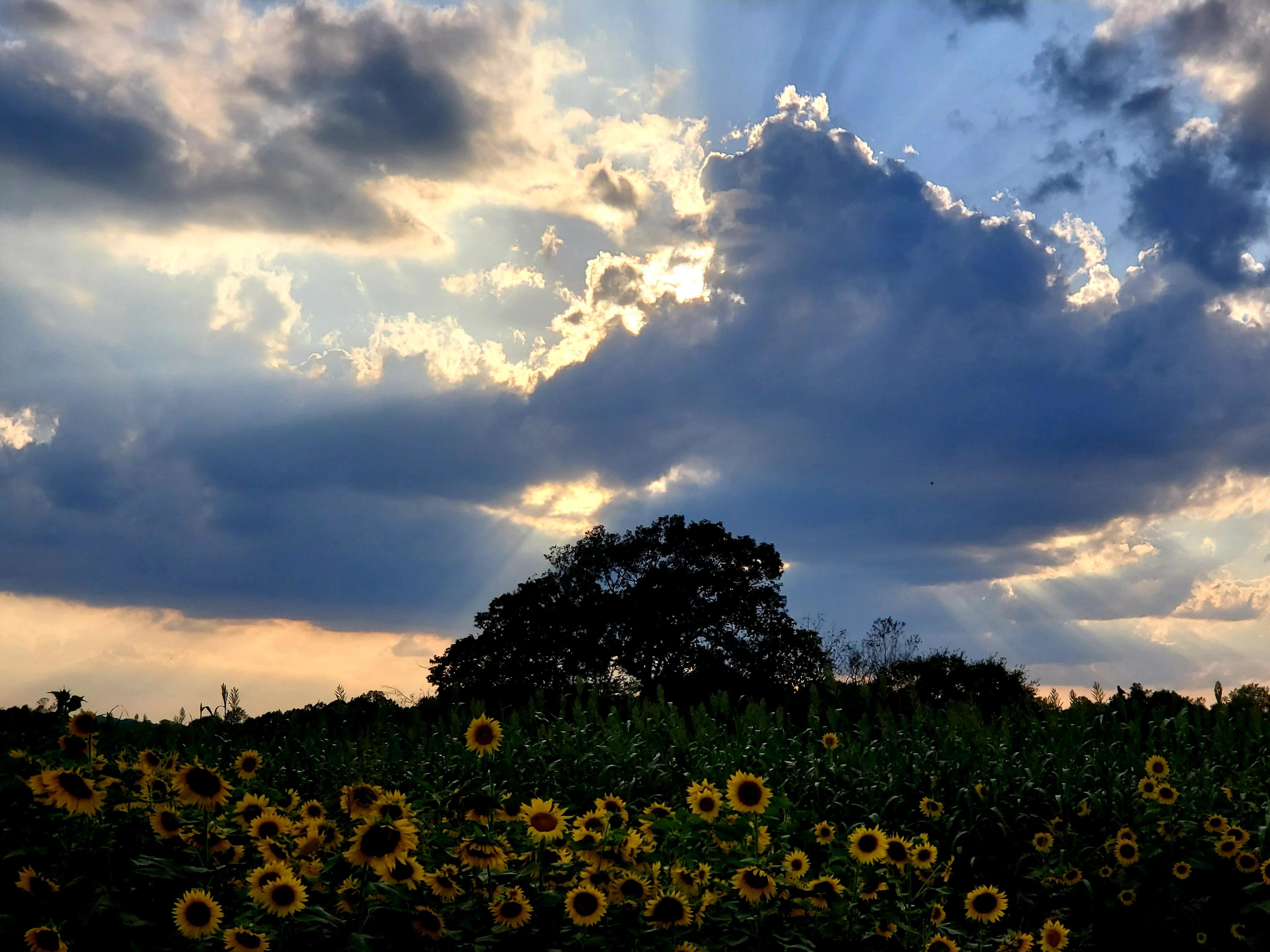 Scottsville, Kentucky, USA