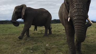 克尼斯納大象公園/