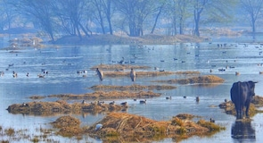 Sultanpur Bird Sanctuary