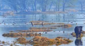 Reserva ornitológica Sultanpur