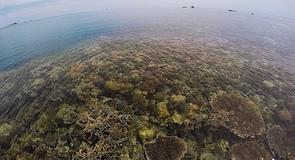 חוף טנג'ון טינגי