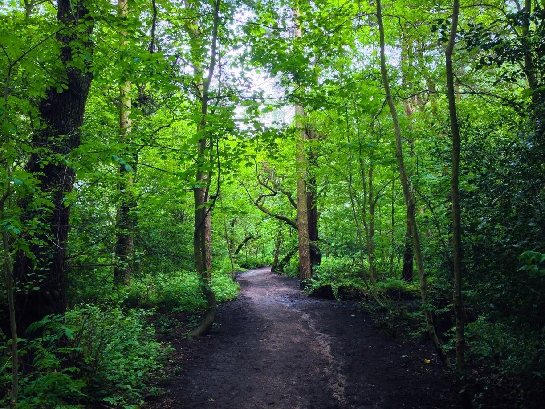 Ecclesall Woods, Sheffield, England, United Kingdom