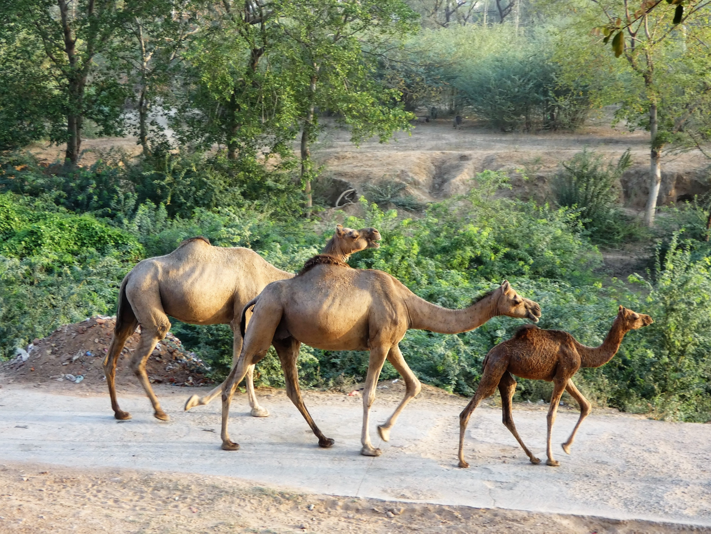 Jamwa Ramgarh, Rajasthan, Indien