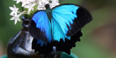 The Coffs Harbour Butterfly House is a place worth stopping if you love nature, have kids and or just love butterflies. It is a bit pricey for admission, but as a photographer I was happy to pay the price, especially after capturing this Ulysses butterfly.