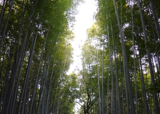 Sagatenryuji Tateishicho, Japan