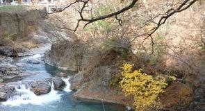 Rijeka Shima