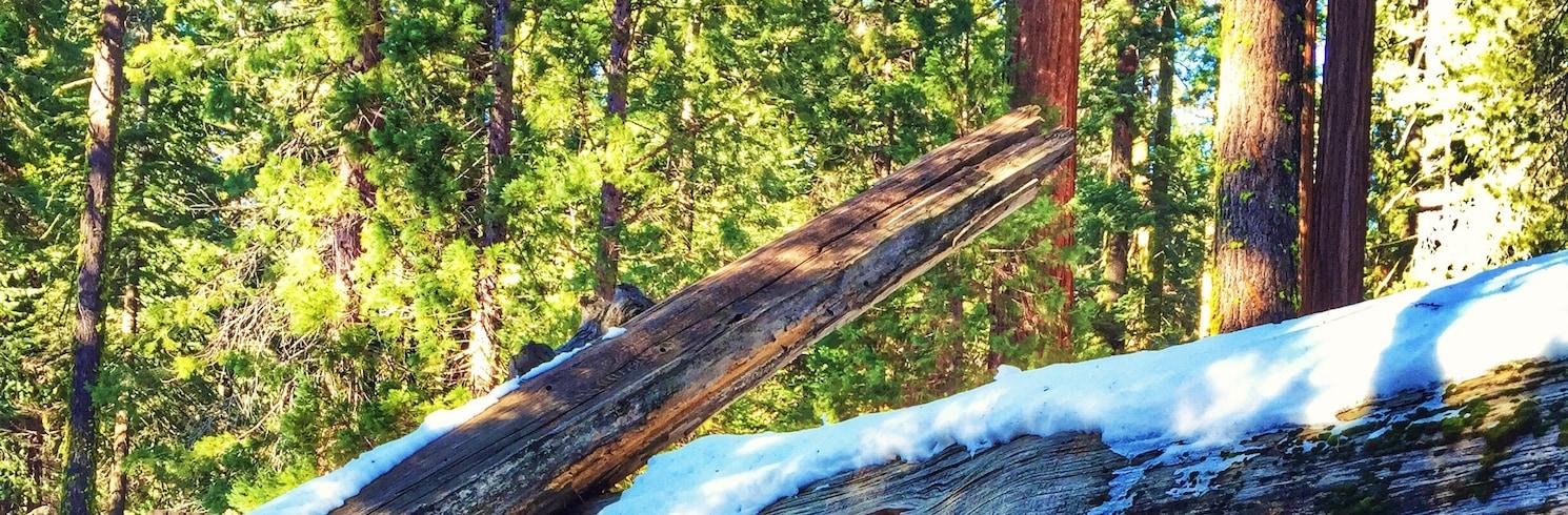 Sequoia National Park, California, United States of America