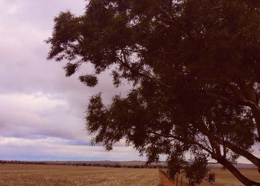 ポリッシュ ヒル リバー, サウスオーストラリア州, オーストラリア
