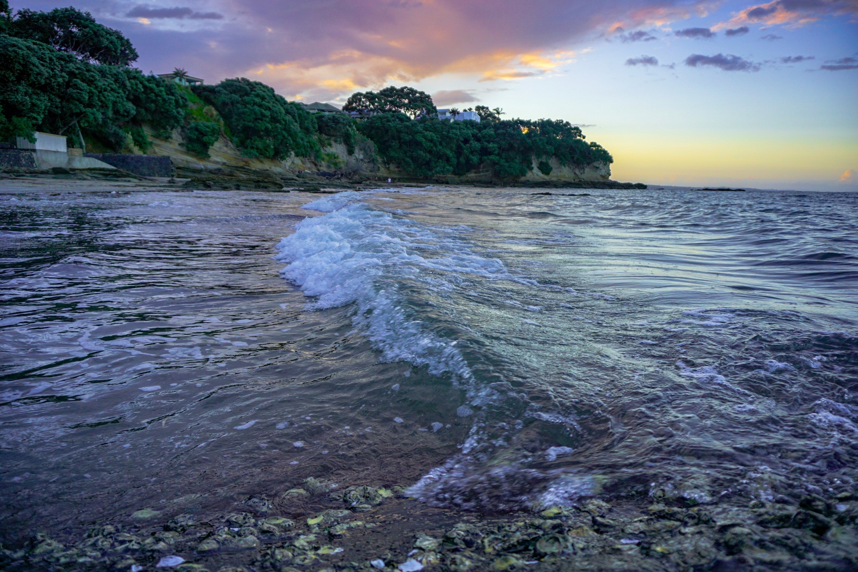 Narrow Neck Beach, Auckland Region, New Zealand